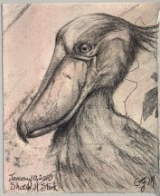 2010-1-10shoebillstork