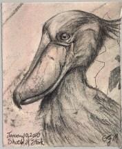 2010-1-10shoebillstork