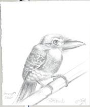 2010-1-15puffbird