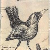 2010-1-20blackbird