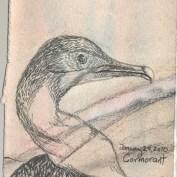 2010-1-29cormorant