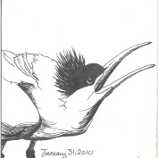 2010-1-31californiatern