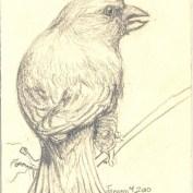 2010-1-4greenfinch