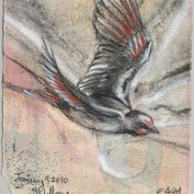 2010-1-9swallow