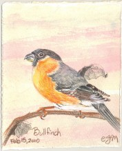 2010-2-15bullfinch