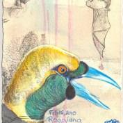 2010-2-16raggianabirdofparadise
