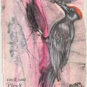 2010-2-18blackwoodpecker