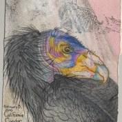 2010-2-3californiacondor