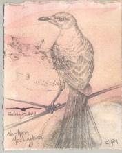2010-2-5northernmockingbird