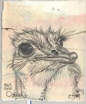 2010-2-7ostrich