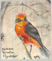 2010-2-22vermilionflycatcher