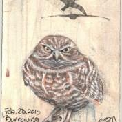 2010-2-23burrowingowl