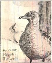 2010-2-24-parasitic-jaeger