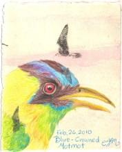 2010-2-26-blue-crowned-motmot