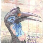 2010-3-1-abyssinan-ground-hornbill