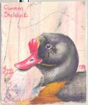 2010-3-2-common-shelduck
