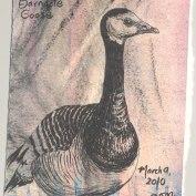 2010-3-9-barnacle-goose