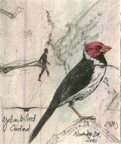 2010.11.29 Yellow Billed Cardinal