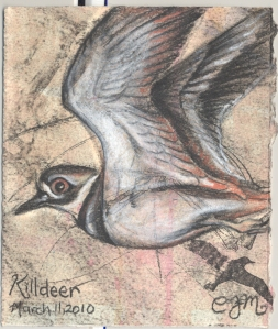2010.3.11.Killdeer