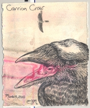 2010.3.15.Carrion.Crow