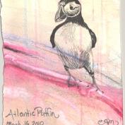 2010.3.16.Atlantic.Puffin