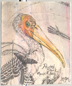 2010.3.19.Painted.Stork