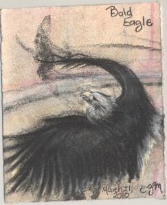 2010.3.21.Bald.Eagle.1