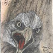 2010.3.21.Bald.Eagle.2