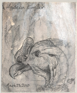 2010.3.23.Andean.Condor