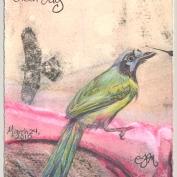 2010.3.24.Green.Jay