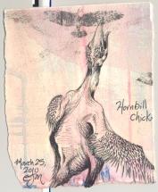 2010.3.25.Hornbill.Chick