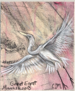 2010.3.26.Great.Egret