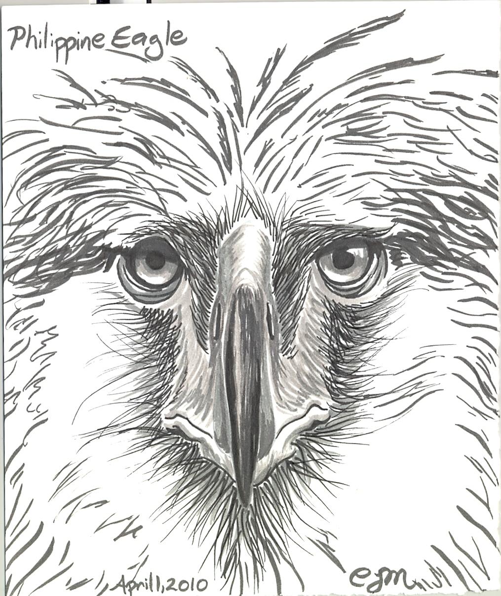 Philippine Eagle | claire meyler