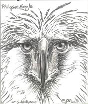 2010.4.1.Philippine.Eagle