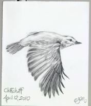 2010.4.12.Chiff.chaff