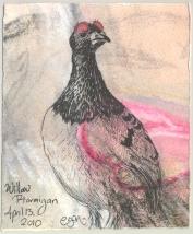 2010.4.13.Willow.Ptarmigan