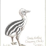 2010.4.16.Double.Wattled.Cassowary.Chick
