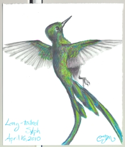 2010.4.16.Long-Tailed.Sylph