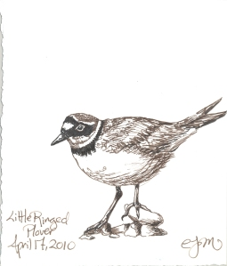 2010.4.17.Little.Ringed.Plover