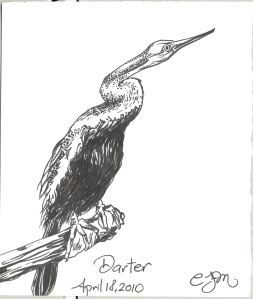 2010.4.18.Darter