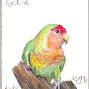 2010.4.19.Lovebird