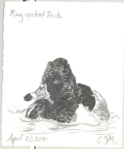 2010.4.20.RingNecked.Duck
