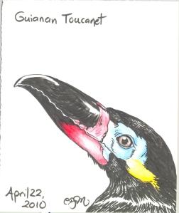 2010.4.22.Guianan.Toucanet