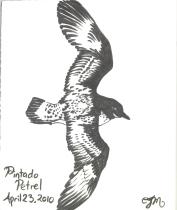 2010.4.23.Pintado.Petrel
