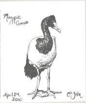 2010.4.24.Magpie.Goose