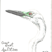 2010.4.28.Great.Egret