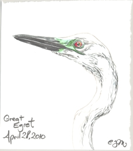 2010.4.28.Great.Egret