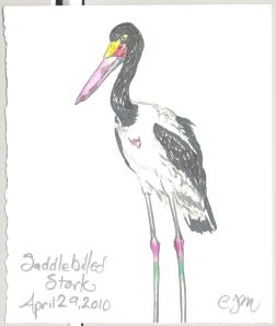 2010.4.29.Saddlebilled.Stork