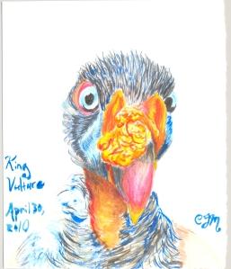2010.4.30.King.Vulture