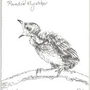 2010.4.8.11.day.Paradise.flycatcher